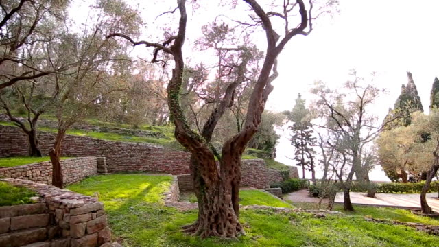 Olive groves and gardens in Montenegro video