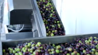 Olive Oil Production and Process video