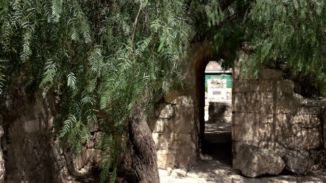 Olive Tree Guarding Hidden Entrance to Church Courtyard video
