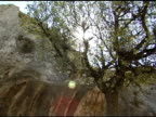 Olive Tree with Sun and Hills video