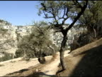 Olive Trees and footpath in Israel video