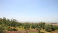 HD: Olive Trees; Mardin, Turkey video