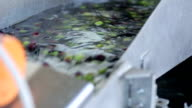Olive Washing Machine and Olives video