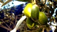 Olives video
