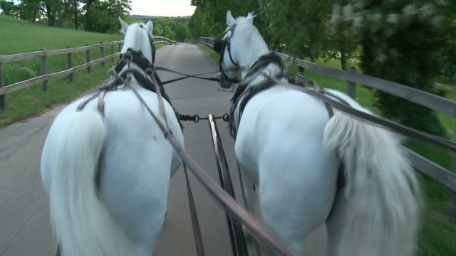 HD: On A Horse Carriage video