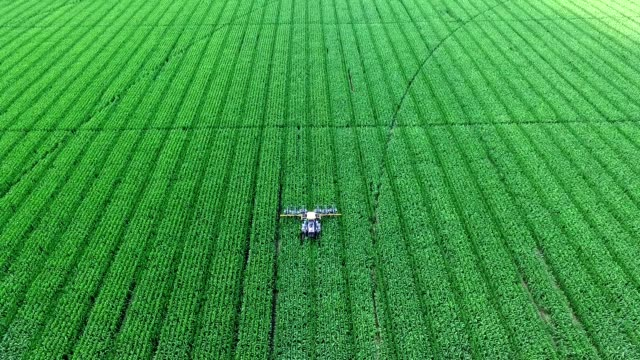 On the corn field there is a tractor, a machine that parses, removes lateral young shoots of corn, increasing the yield of the cornfield.Corn cultivation.Summer sunny day.aerial video video