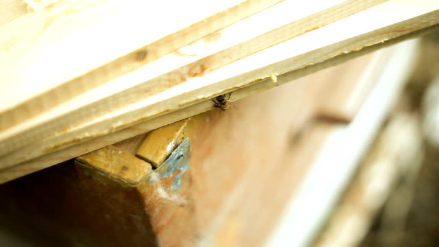One bee walks on wooden boards, exploring the territory video