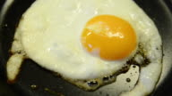One fried egg in a pan video