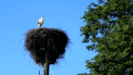 one stork in the nest on a pole against a blue sky video