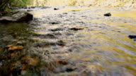 Oosterneck Creek at Tellico River in the Cherokee National Forest near by Cherohala Skyway video