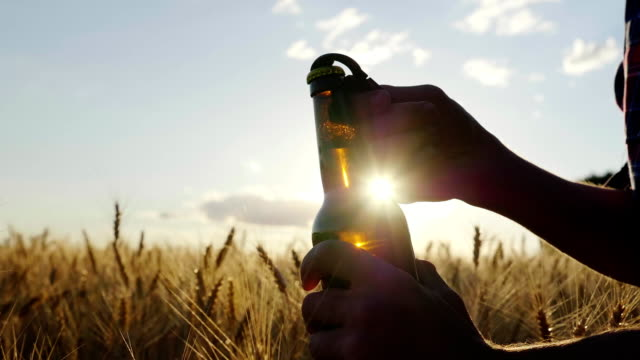 Open a bottle of beer against the backdrop of the barley field at sunset. A man's hand opens a bottle, a slow motion video video