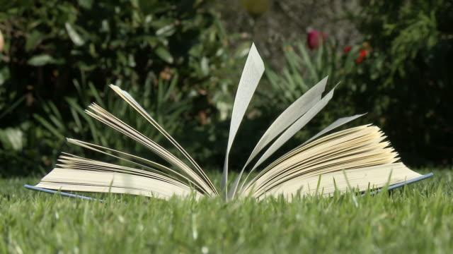 HD: Open book in wind video