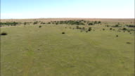Open Veldt And Cattle  - Aerial View - Orange Free State,  Fezile Dabi District Municipality,  Moqhaka,  South Africa video