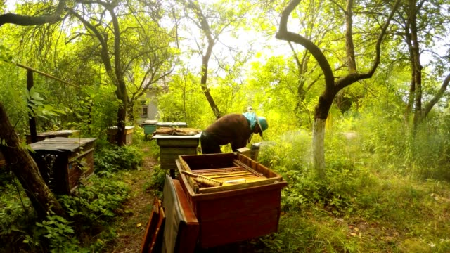 Opened Hive Bee Smoker Fumes Hiver Work Near Apiary in Forest video