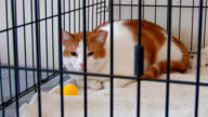 Orange and White Tabby Cat Locked in a Cage video