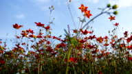 orange flowers in the flowerbed video