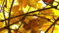 Orange Leaves video