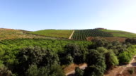 Orange, lemon trees and grape plantations. Agriculture in the south of Portugal, the Algarve. video
