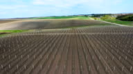 Orchard of young apple trees growing in lines in early spring video