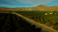 Orchards Aerial video