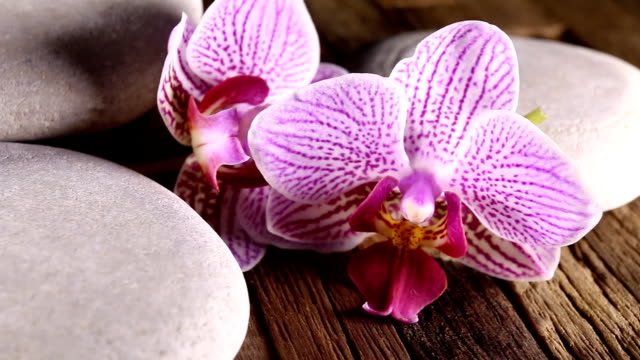 Orchid and white zen stones on wooden background. video