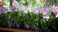 Orchid farm video