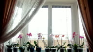 Orchid flowers on a window sill video