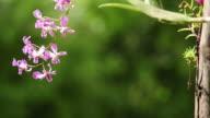 Orchid purple video