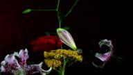 Orchid set flower. video