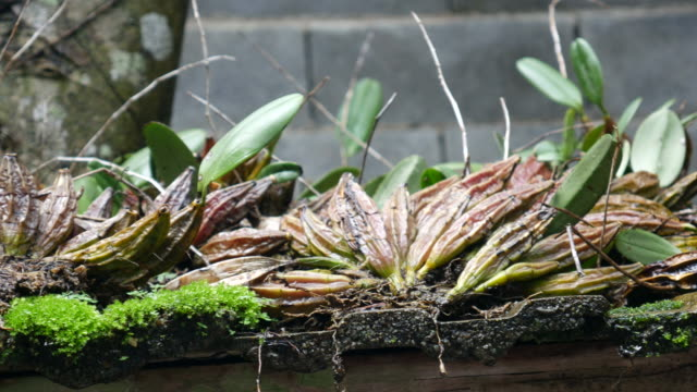 orchid stems on the old roof video