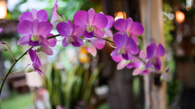 Orchid twig video
