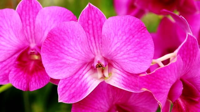 Orchid video