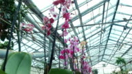 Orchids in the greenhouse video