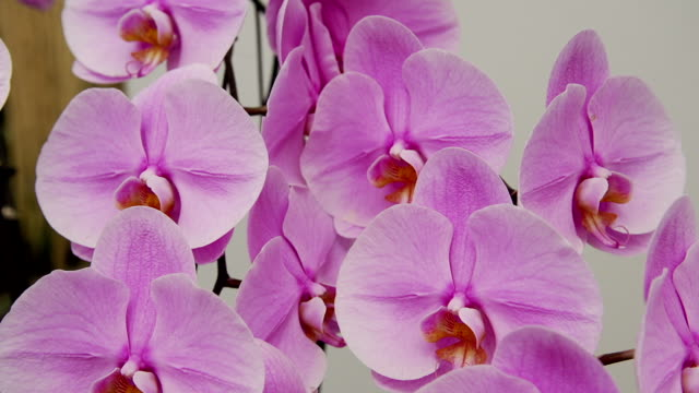 Orchids video