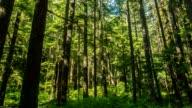 Oregon Forest video