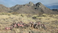 Organ Mountains video