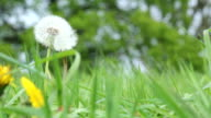 Organic Field video