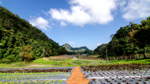 Organic garden surrounded by mountain video
