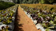 HD : Organic Garden video