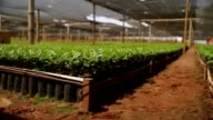 Organic plantation video