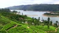 organic tea crop plantation sri lanka video