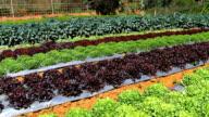 Organic vegetable video