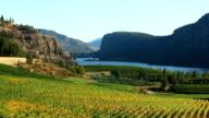 organic vineyard okanagan valley mcintyre bluff video