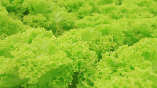 organics farm. video