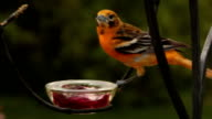Oriole Landing video