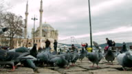 Ortakoy Mosque and Pigeons video