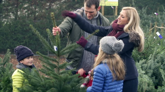 Outdoor Family Choosing Christmas Tree Together video