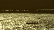 Outrigger Canoe in Hawaii video