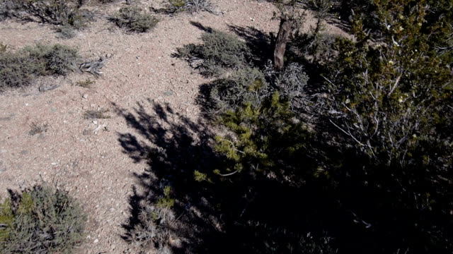 AERIAL: Over the cliff of Grand Canyon video