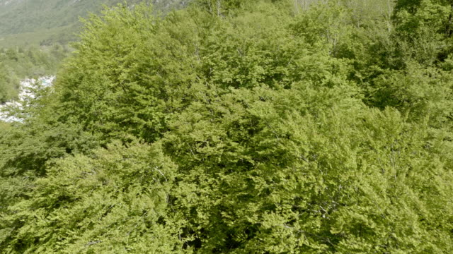 AERIAL Over the green treetops video